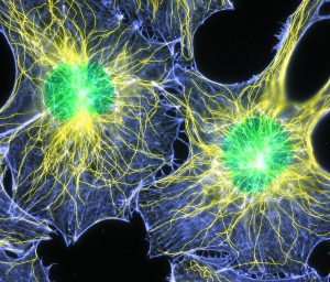 The Cell Atlas
